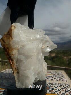 Fighting EAGLE Stone Bird Figurine Hand Carved in Brazil Clear Quartz Base